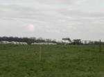 im Vordergrund Brachfläche der Schlammgrube und deren Setzungspegeln, Hintergrund wirtschaftender Landwirt